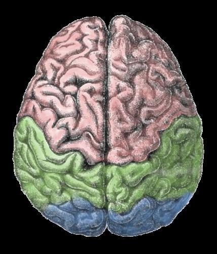 Living Brain Tissue Experiments Raise Ethical Questions