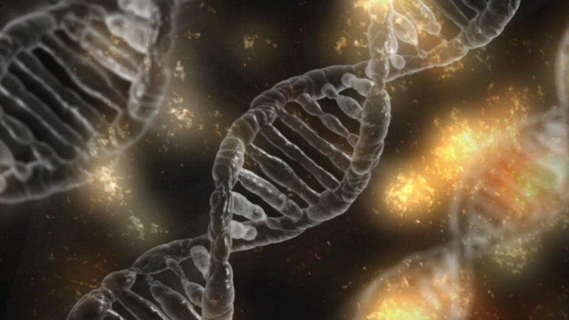 Scientists Create Synthetic DNA With Four Extra Letters