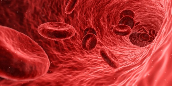 Scientists Just Made Human Egg Cells From Blood