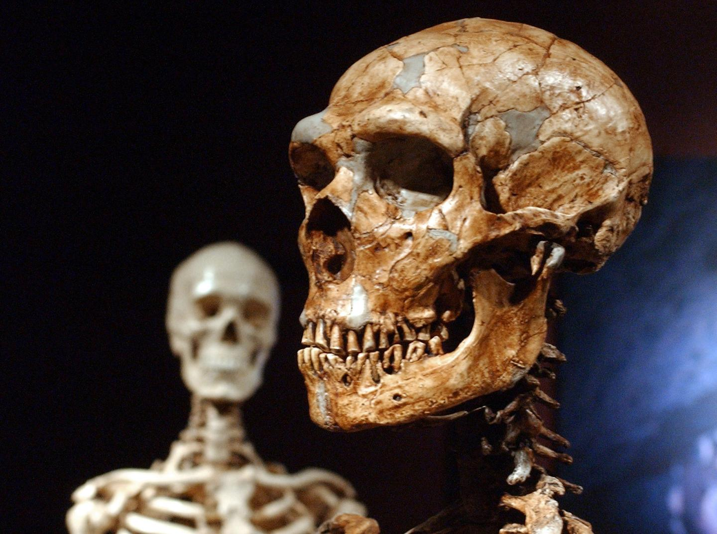 Neanderthals Cared for Each Other and Survived into Old Age