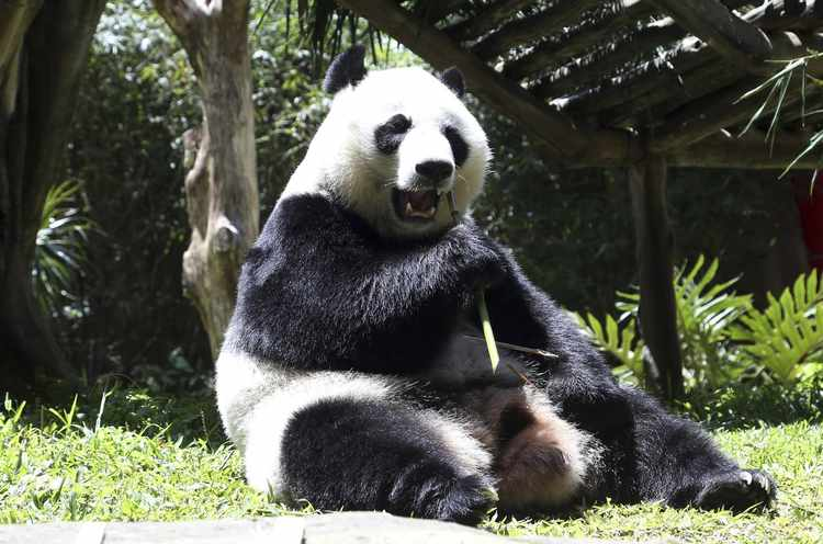 'Of Pandas and People': A Brief History of the Original Intelligent Design Textbook | RealClearScience