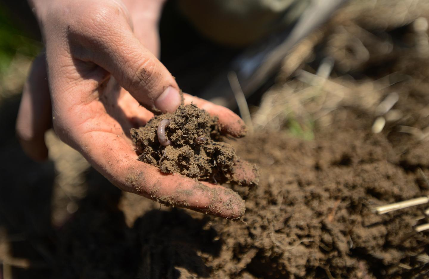 Earthworms reproduce in simulated mars soil realclearscience for Where do we find soil