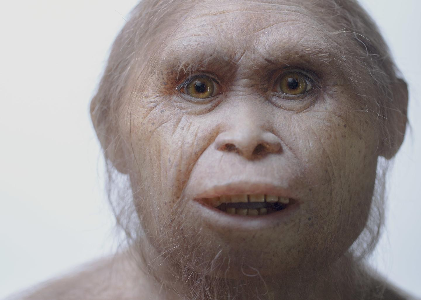 Fast Evolution Explains Why Our 'Hobbit' Ancestors Were Short