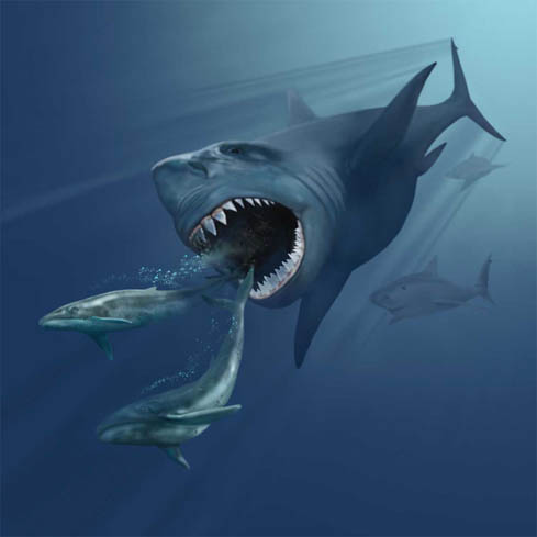 Did Supernovas Kill Off the Megalodon?