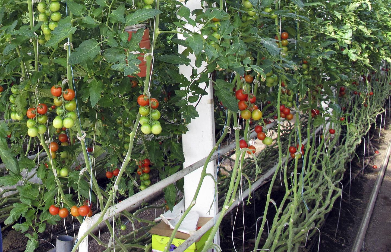 Why Rachel Carson Didn't Like the Organic Food Movement