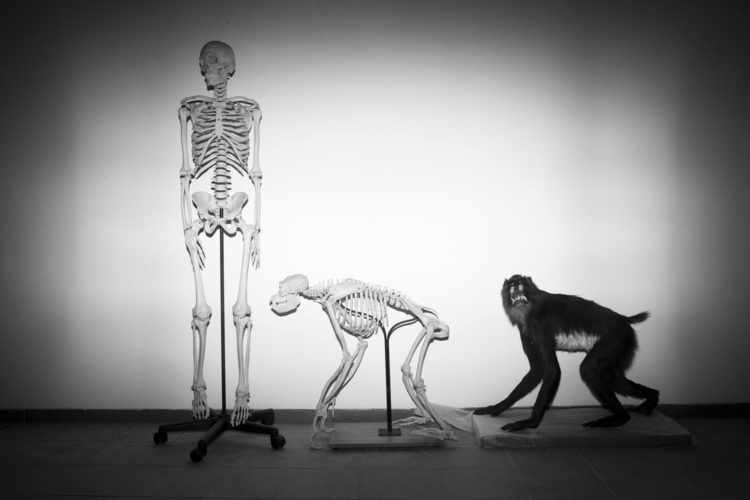 Seven Key Misconceptions about Evolutionary Psychology