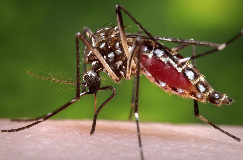 Has Malaria Really Killed Half of Everyone Who Ever Lived?