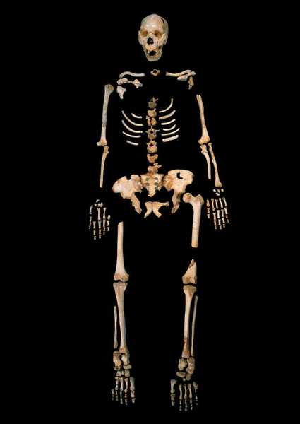 Nested 'DNA' of Ancestor That Mated With Humans Found