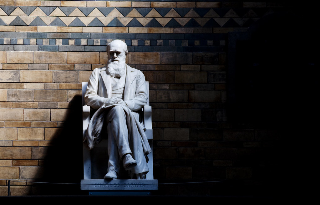 The Meaning to Life? An Answer From a Darwinian Existentialist