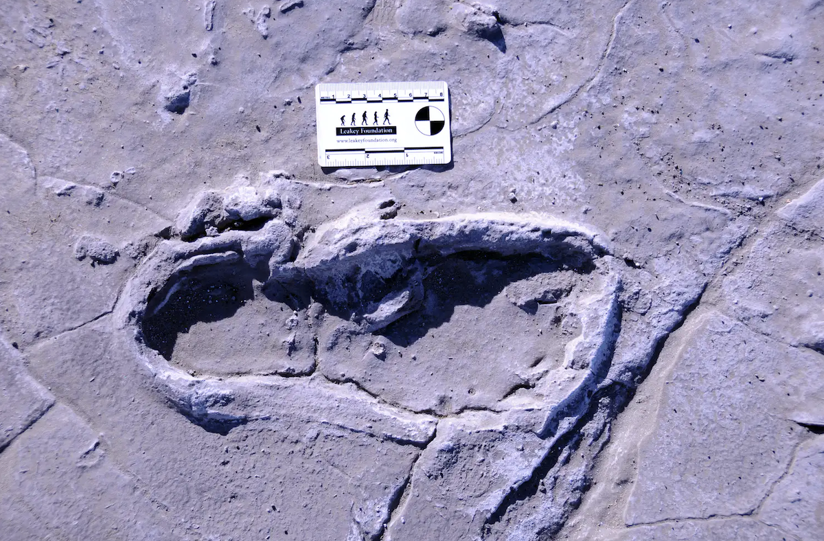 Prehistoric Footprints Provide Rare Snapshot of Ancient Human Group Behavior