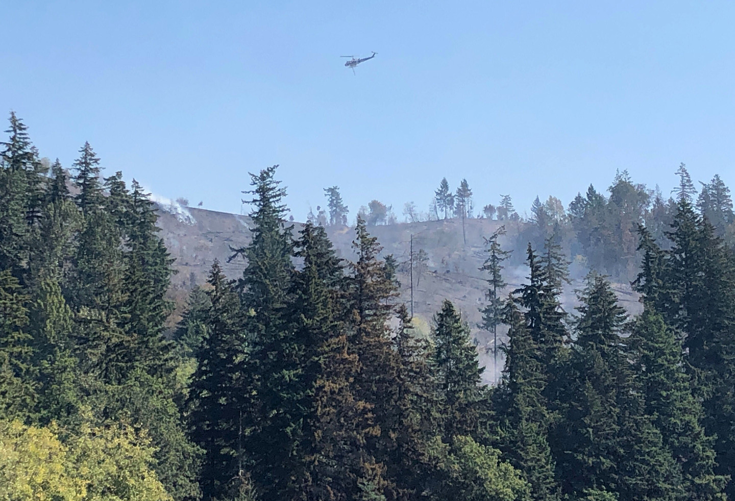 Forests in the U.S. West Are Out of Ecological Balance. Blame Wildfire Suppression