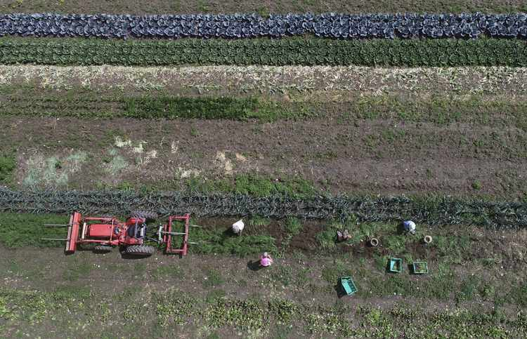 Organic Farming Is Not Compatible With Conservation
