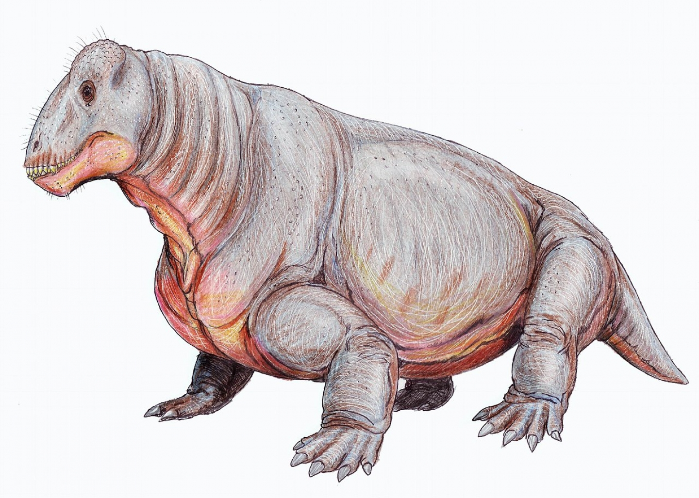Amazing Creatures From Before the Time of the Dinosaurs