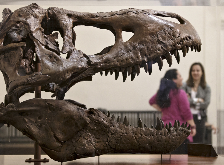 Scientists Estimate How Many T. Rexes Lived in North America