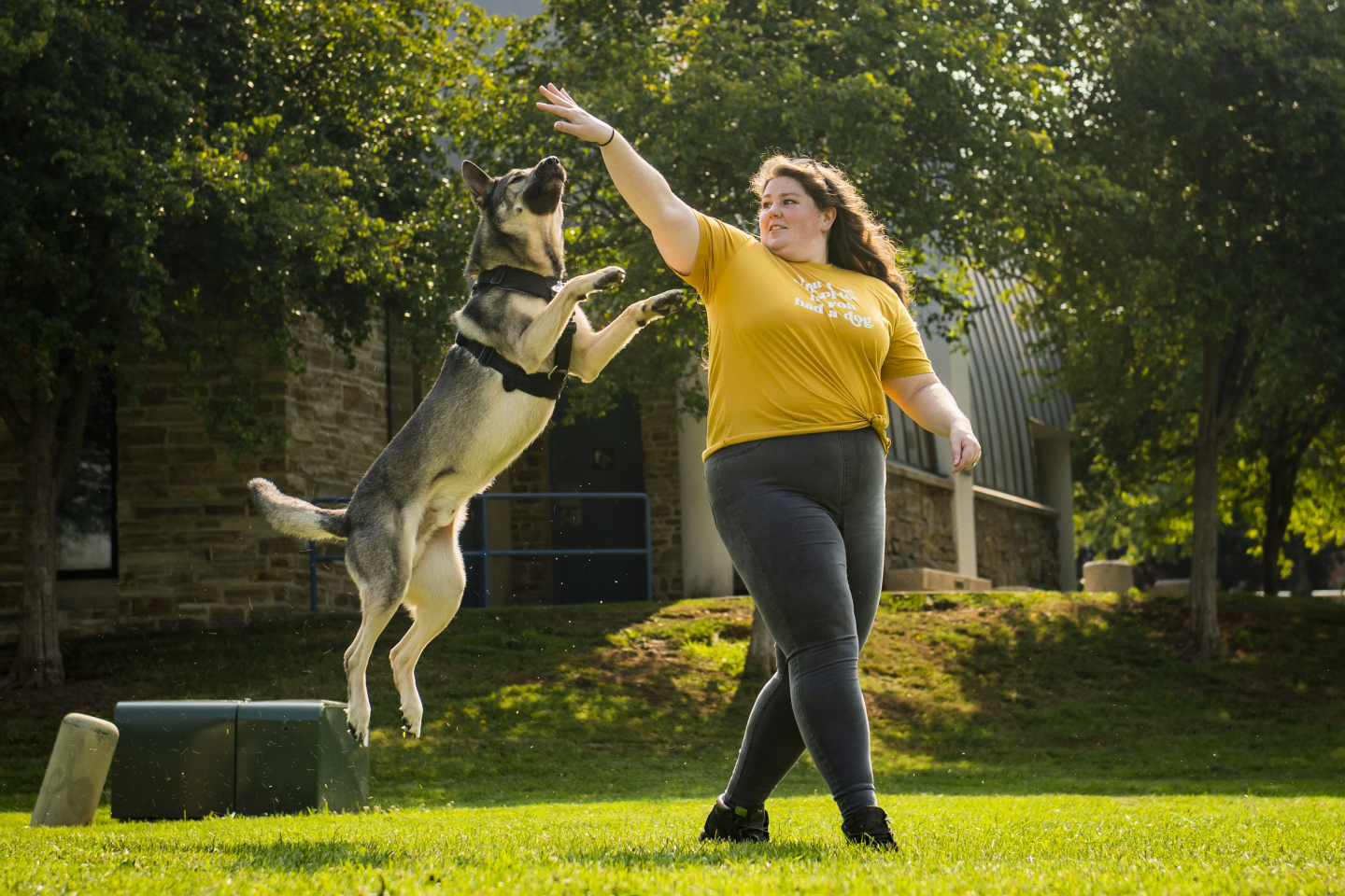 Shock Collars May Make Dogs More Pessimistic