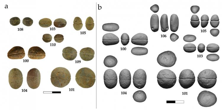 Pedergnana et al. / PLoS ONE